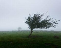 Hvad kan vi lære af et træ?