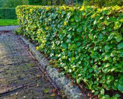 Havehække og begrænsninger